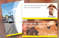 Ray White Brochure & Advertising